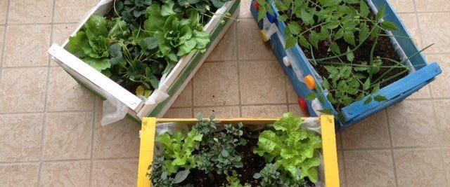 Consociazione delle piante nell\'orto da terrazzo - Autoproduciamo