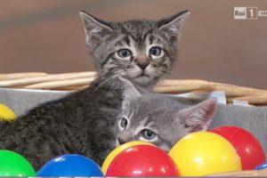 Gatti e palline
