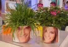 piante capellone