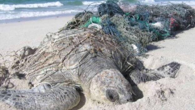 Inquinamento tartaruga