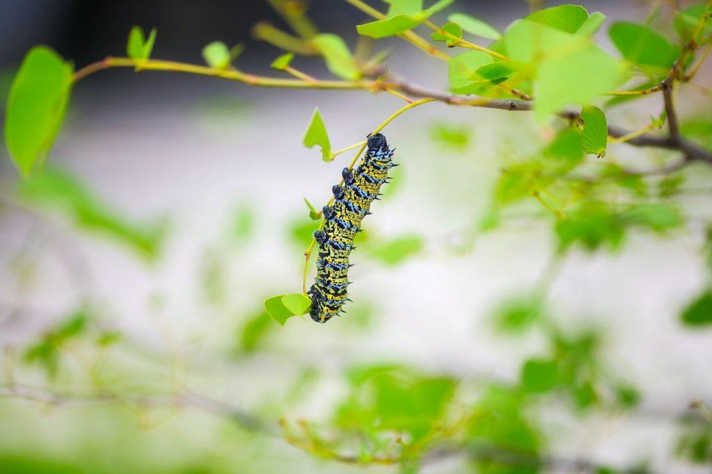 Antiparassitari naturali: bruco