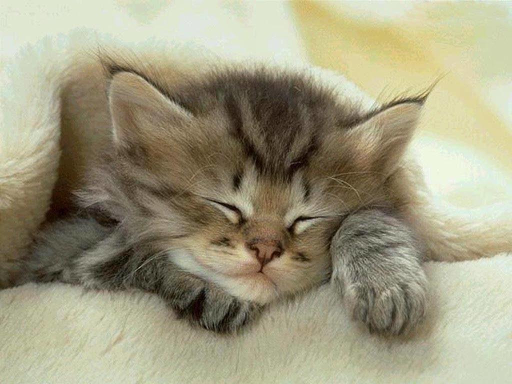 biscotti gatto fai da te