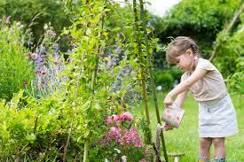 consigli innaffiare piante