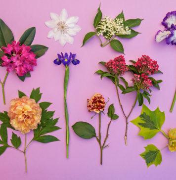 piante selvatiche commestibili