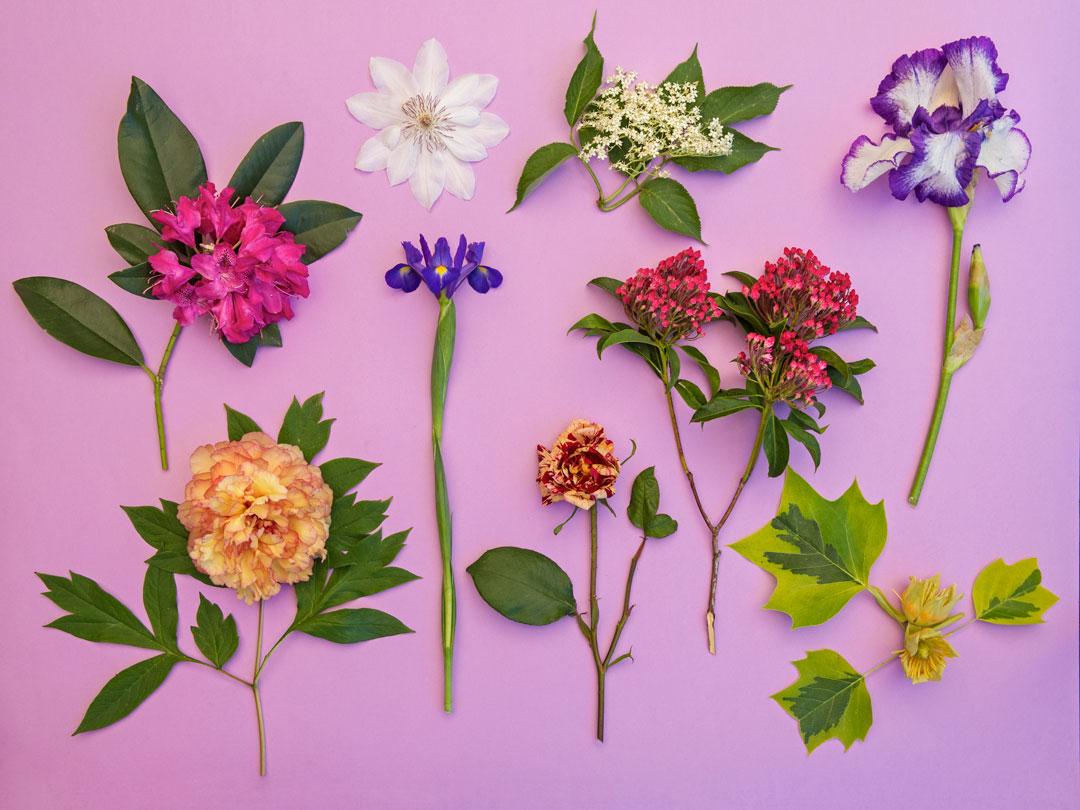 Le piante selvatiche commestibili pdf in regalo - Piante regalo ...