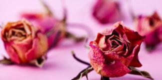 cipria rose fai da te