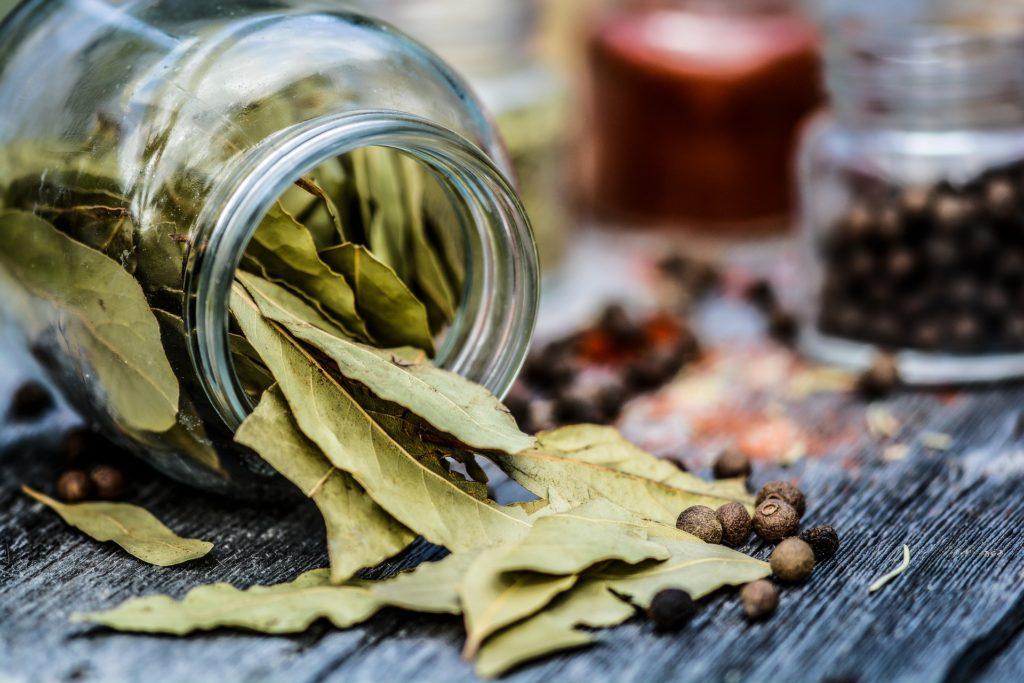 Erbe aromatiche - Alloro