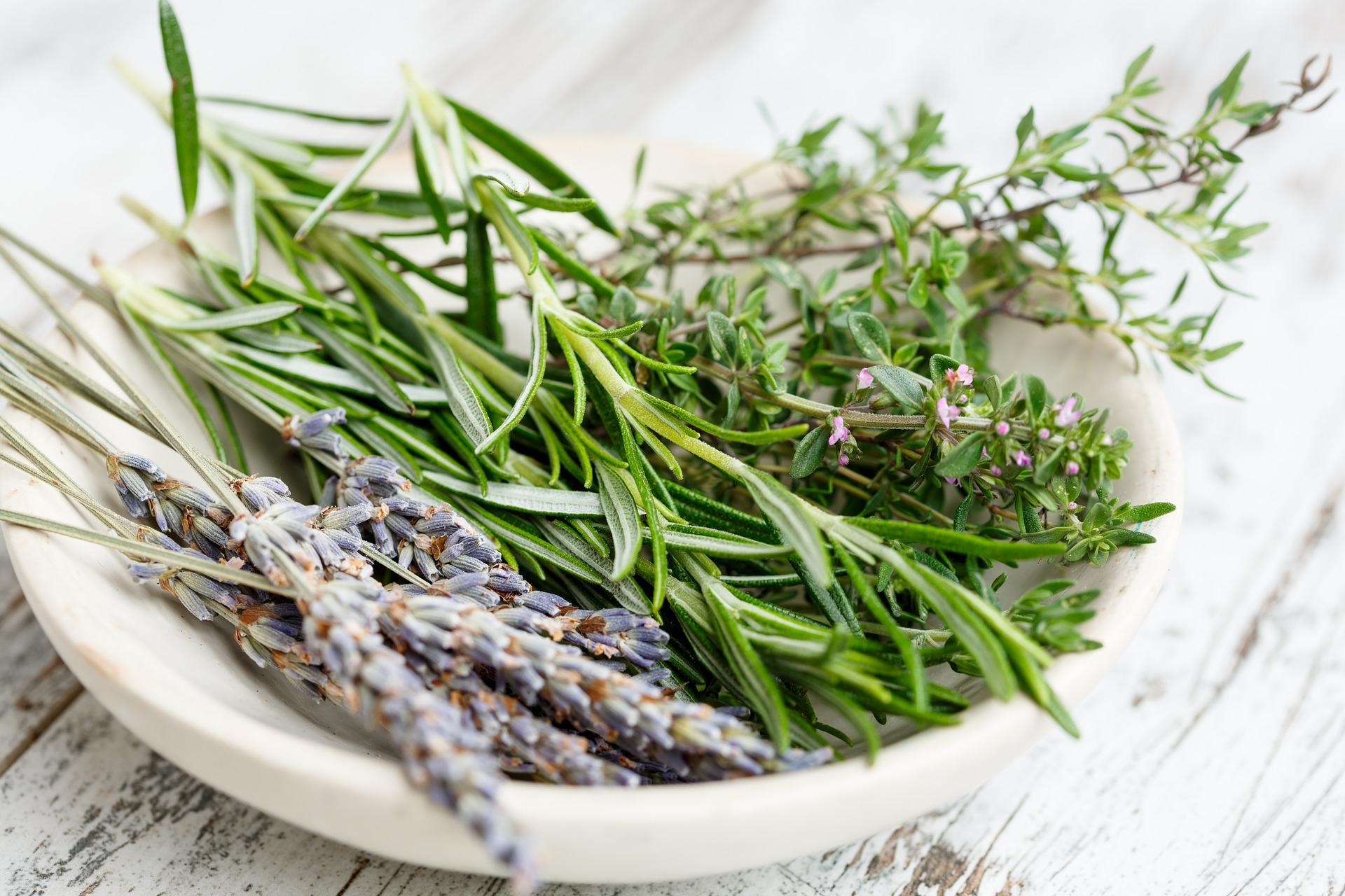 Come Seccare Le Piante come essiccare le erbe aromatiche - autoproduciamo