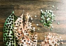 Coriandoli biodegradabili fai da te: Carnevale ecologico