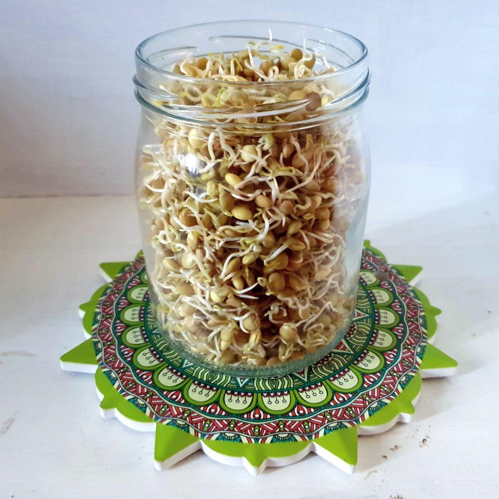 come fare i germogli di lenticchie