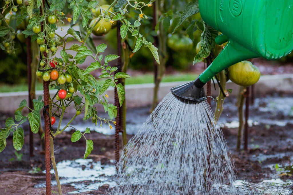 Orto - Fertilizzante naturale