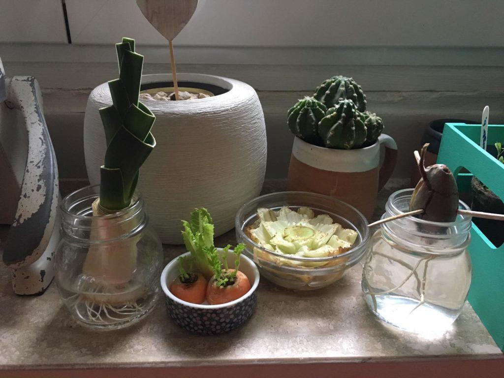 Scarti di Verdure - L'orto di Stefano, Fabrizia e Bianca