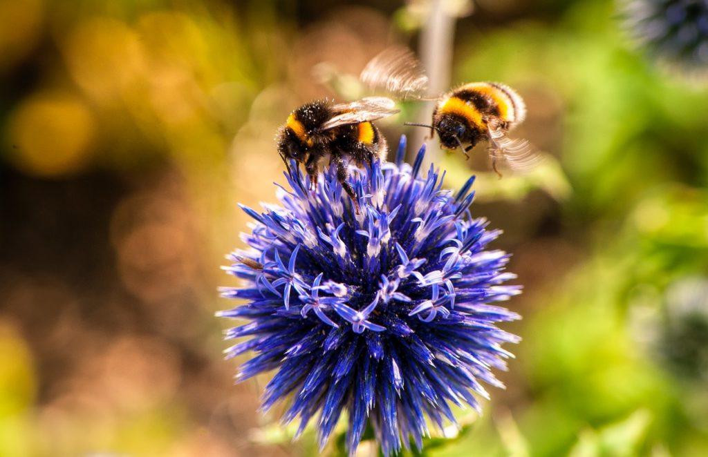 Salvare le api - Autoproduciamo - Lucia Cuffaro