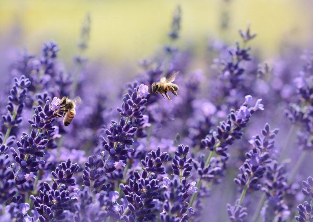 Salvare le api - Autoproduciamo