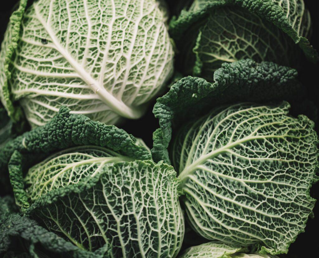 Dado vegetale con scarti di cavolo - Verza