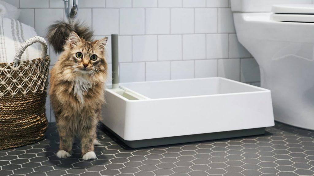 Pulire la lettiera del nostro gatto