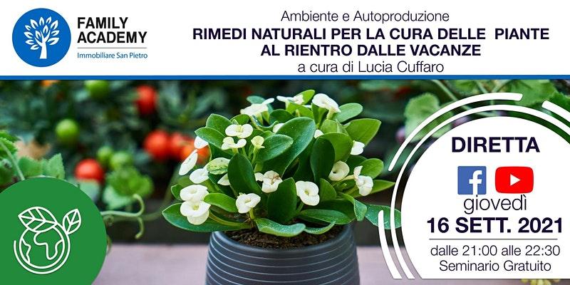 Rimedi naturali per la cura delle piante al rientro dalle vacanze